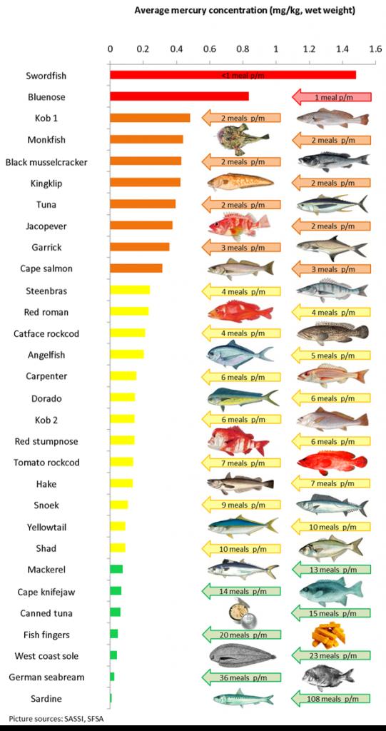 Daftar Ikan yang Mengandung Merkuri